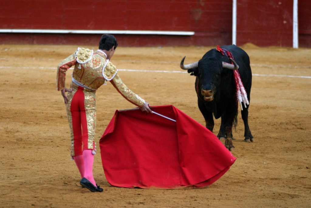 A bull charging a red cape