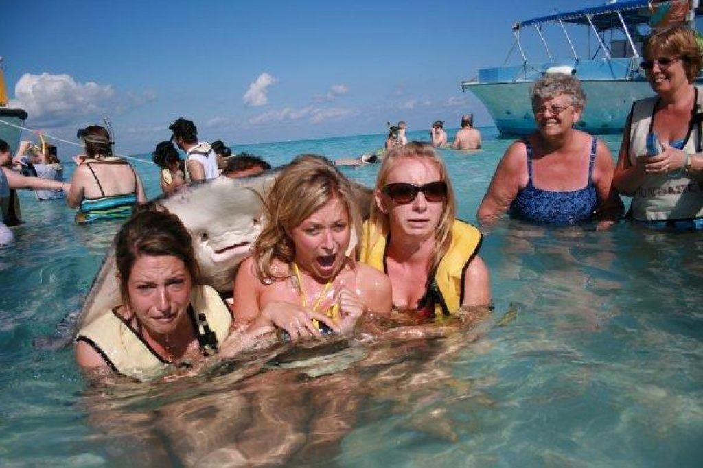 A stingray photobombing a picture