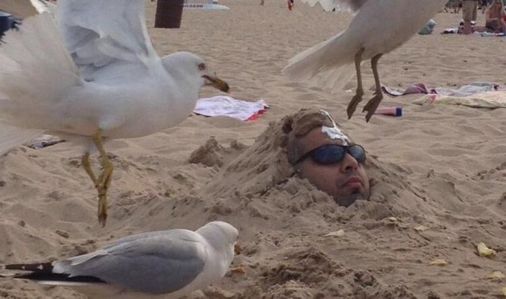 Guy buried in sand being attacked by seagulls
