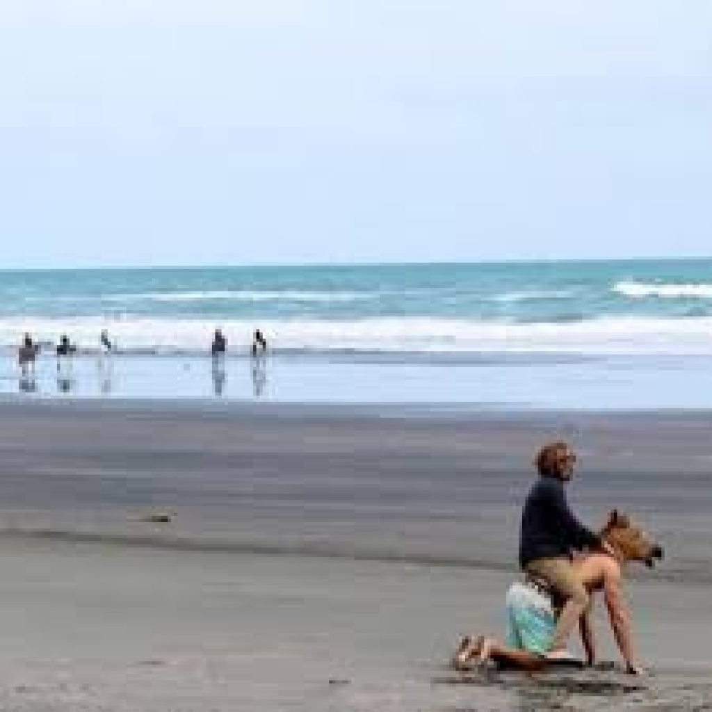 Guy riding another guy in a horse mask on the beach