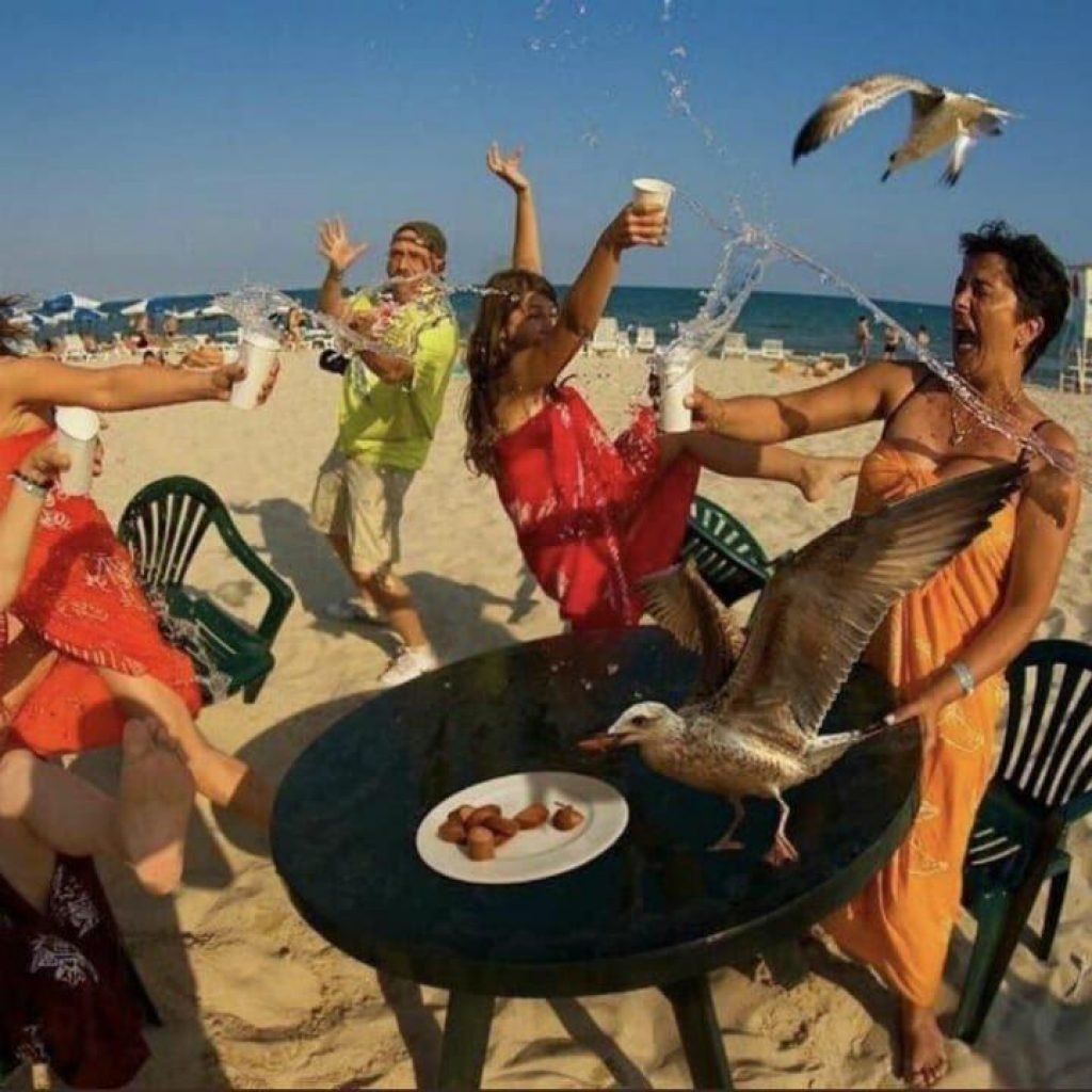 Seagulls ruining the party